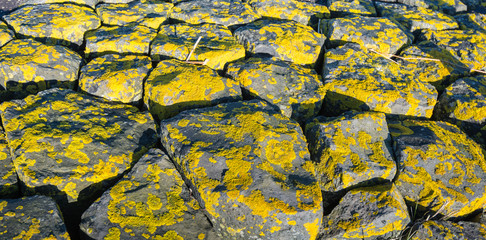 Yellow lichen on the rocks