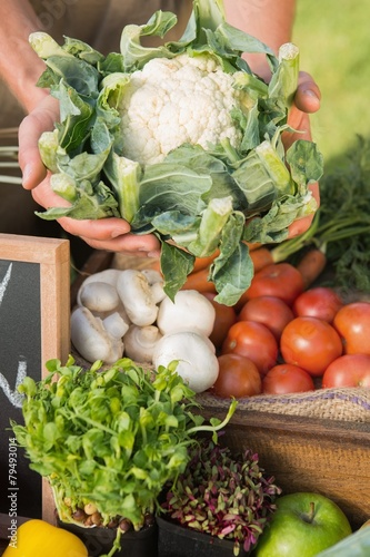 Farmer showing his organic cauliflower