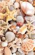 Seashells background. - 79493884