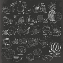 Collection of fruit in sketch style on dark background
