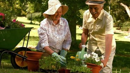 Happy older couple gardening together