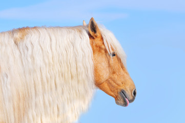 palomino horse with long mane