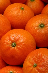 Orange mandarins pack