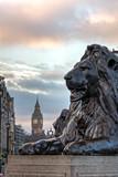 Lion Trafalgar Square - 79507480