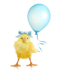Cute little chicken with balloon