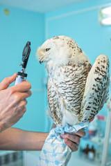 owl at vet