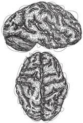 Brain Sketches