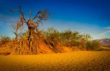 dead tree, Death Valley National Park, California, USA
