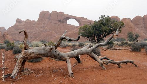 Zdjęcia na płótnie, fototapety, obrazy : Arch in the Mist