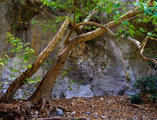Cave in Crete