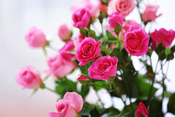 Beautiful pink roses on light background