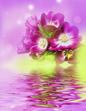 bunch of purple tulips on colors background - 79518857