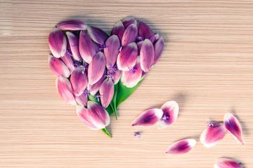 heart from flower petals