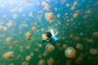 Tourist snorkeling in Jellyfish Lake - 79520659