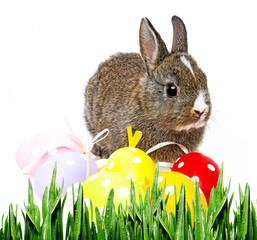 little rabbit and easter eggs