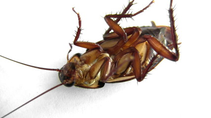 Fumigated Roach Flipped