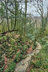 Yew-tree grove, Sochi caucasian biosphere reserve