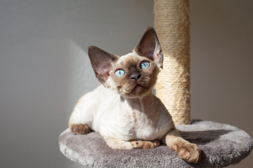 Beautiful cat sitting on the scratching post