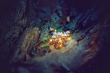 Magical mushrooms in a dark forest - 79527470