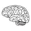 brain - 79528057