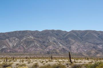 The Los Cardones National Park