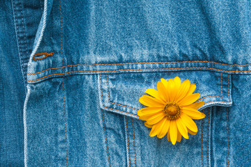 Gelbe Blüte im Knopfloch der Jeansjacke, endlich Sommer