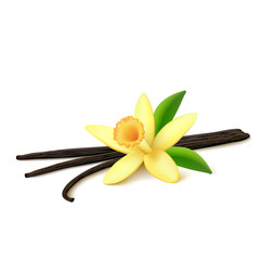 Vanilla pods with flower on white background