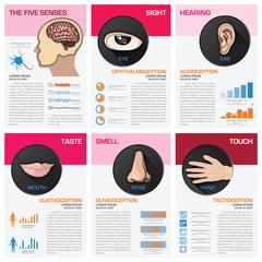 The Five Senses Chart Diagram Infographic