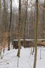 firewood in winterly forest