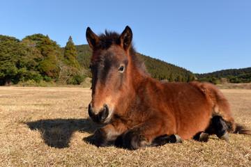 御崎の仔馬