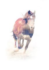 Horse. Double exposure