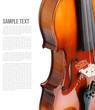Violin - 79541875