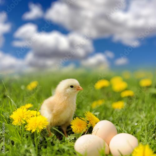 Foto op Plexiglas Draken Little chicken