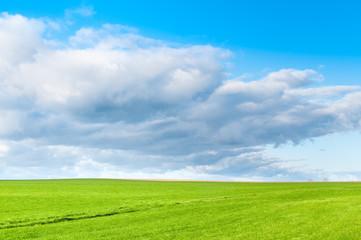 Landwirtschaft, grünes Feld in sonniger Landschaft, Wachstum