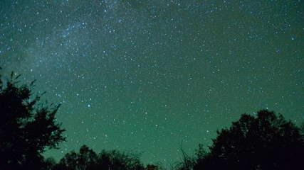 Time lapse of stars moving across sky in front of tree branches
