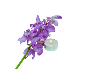 Pink mokara orchids with Tea light  isolated on white background