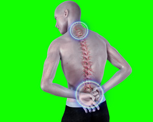 back pain anatomical vision