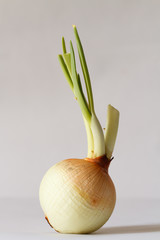 onion isolate on white background