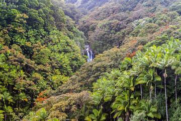 Hawaian Valley