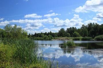 Summer landscape - pond in the park