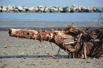 Sea and beach in autumn with particular trunk