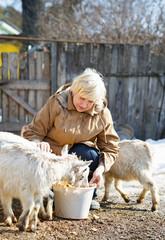 elderly woman feeding goats at the farm