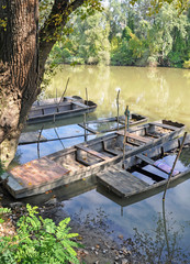 Sunken punts on the river Tisza, next to the bank