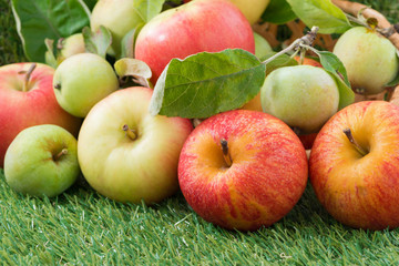 assorted fresh garden apples on green grass
