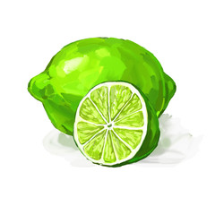 fruit lime Vector illustration  hand drawn  painted watercolor