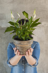 Woman holding a calla plant in a flower pot