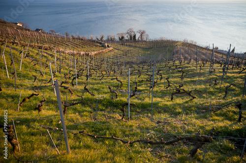 Vignes du Valais, Suisse