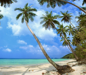 Palm tree with sunny day. Thailand, Koh Samui island. Panorama.