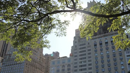 Buildings and tree, Central Park, New York, USA