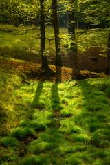 Laubwald im Licht im Sauerland Deutschland